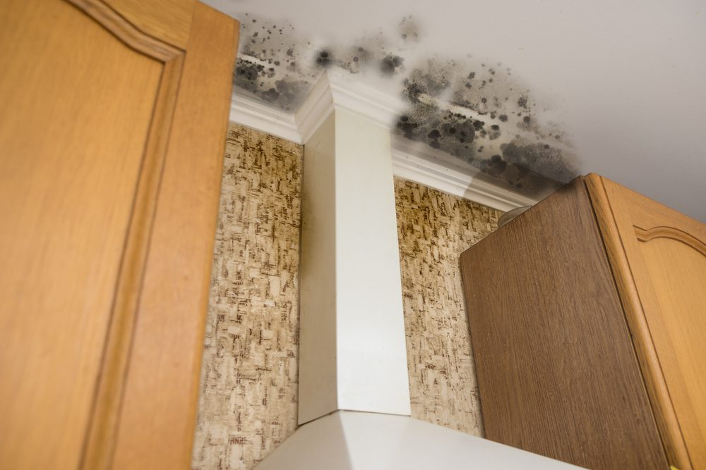 black mold on kitchen ceiling above stove exhaust fan and cabinets